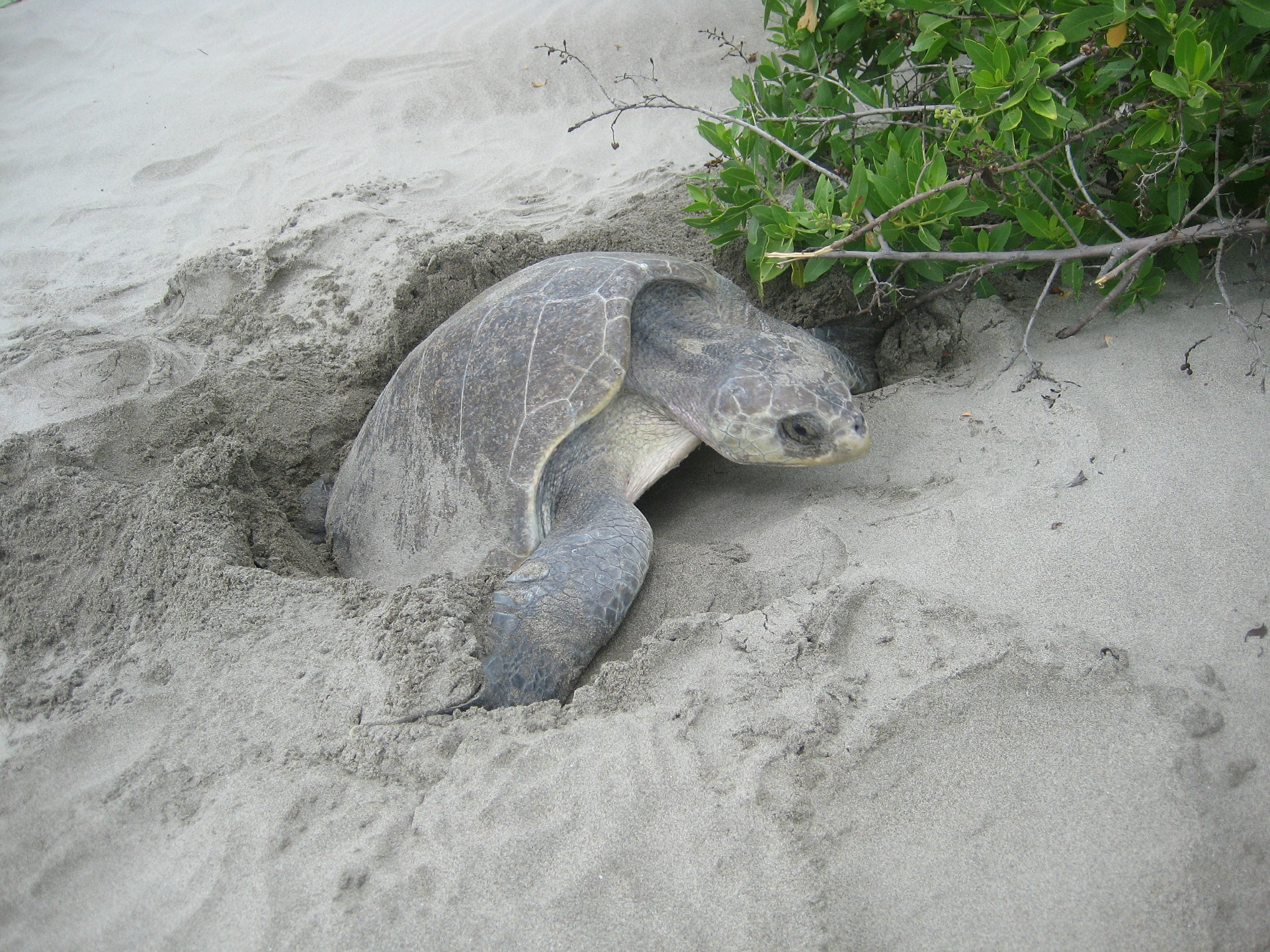 How Hollywood is taking on turtle egg poaching with fake eggs