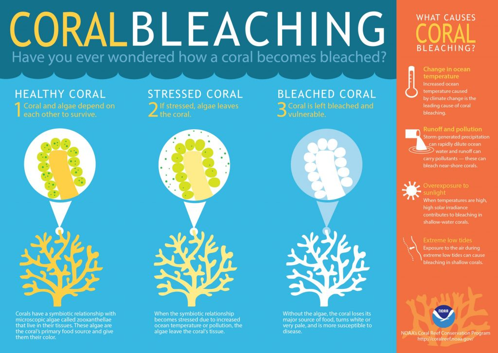 Coral bleaching infograph