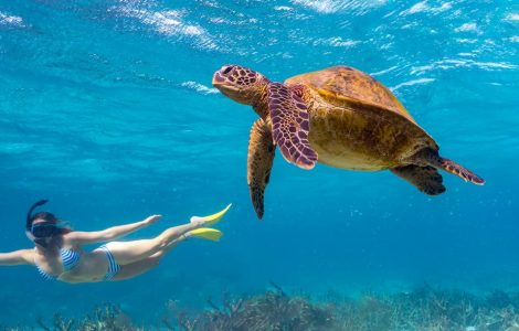 Ningaloo Reef: A Pearl in The West