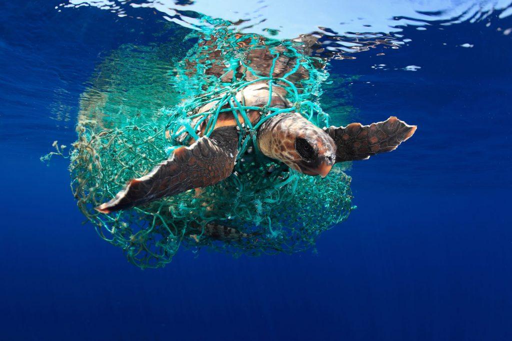 Caretta caretta turtle | © Acevedo/UPY 2019