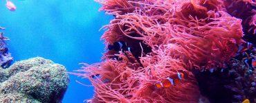 school of fish underwater